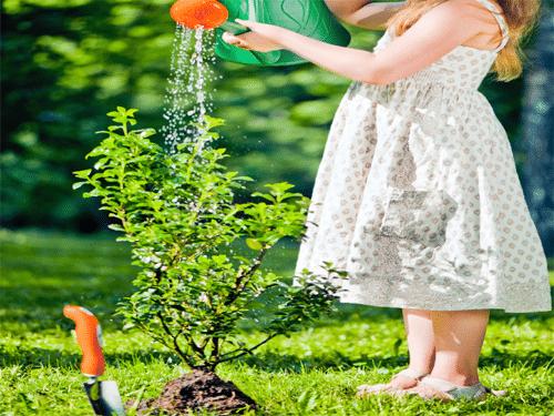 Грижа за дървета закупени от градински центрове