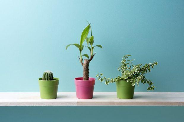 Най-добрите растения за вашия апартамент